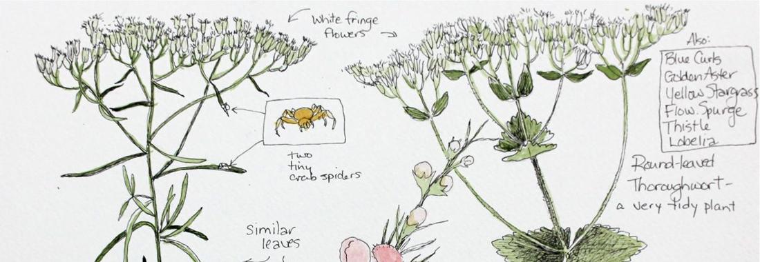 Carnet botanique